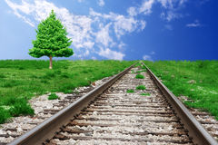 Railroad and Pine Tree. Railroad leading to the horizon with pine tree and blue sky Stock Photo