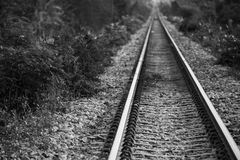 Railroad. S in the vast nature Stock Image