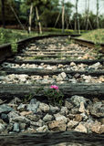 Railroad Rails Royalty Free Stock Images