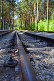 Railroad, rails leaving into the distance. Railway rails leaving in the distance against the backdrop of a beautiful pine forest Royalty Free Stock Image