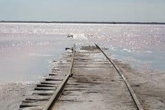 Railroad in salt lake Royalty Free Stock Photography