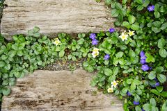 Railroad Ties and Flowers. Two old railroad ties surrounded by flowering ground cover. Background. Space for text Stock Image