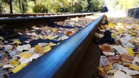 Railroad track in autumn day. Fallen leaves along the rails. Selective focus Stock Image