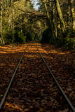 Railroad track in autumn Royalty Free Stock Photo