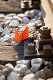 Railroad track with red leaf Royalty Free Stock Photos