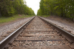 Railroad Track Scene. A straight line railroad track by trees Royalty Free Stock Image