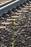 Railroad track. At a sunny summer day Stock Photos