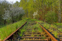 Railroad track winding through forest Royalty Free Stock Image