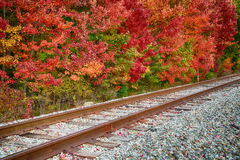 Railroad tracks along autumn trees Royalty Free Stock Photo