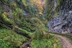Railroad tracks cut through autumn woods Royalty Free Stock Photos
