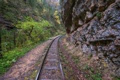Railroad tracks cut through autumn woods Royalty Free Stock Image