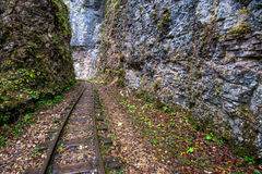 Railroad tracks cut through autumn woods Stock Photos