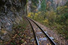 Railroad tracks cut through autumn woods Royalty Free Stock Photo