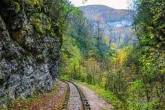 Railroad tracks cut through autumn woods Stock Photography