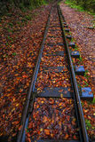Railroad tracks cut through autumn woods Royalty Free Stock Images