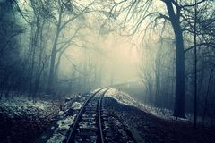 Railroad tracks in foggy forest