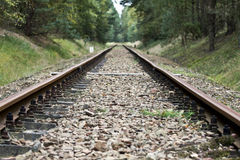Railroad Tracks in the Forest Stock Images