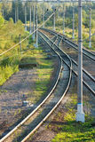 Railroad tracks in forest vertical view Royalty Free Stock Photo