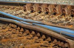 Railroad Tracks Frog Royalty Free Stock Photo