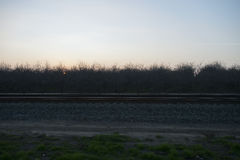 Railroad tracks, olive trees and sunset. Royalty Free Stock Photo