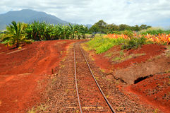 Railroad tracks through a plantation. Railroad tracks take workers deep into a pineapple plantation in Hawaii Stock Images