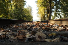 Railroad Tracks. Rusty railroad tracks with trees in the background and fallen leaves on the ground royalty free stock photography