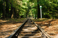 Railroad tracks. On sunny day leading to forest stock images