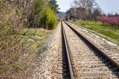 Railroad tracks toward the horizon along blossoming peach trees Stock Photo
