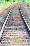 Railroad tracks. View on railroad tracks, track with a colorful plantings Royalty Free Stock Images