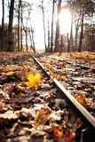 Railroad tracks in the woods in autumn stock photography