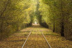 Railroad. Tree tunnel in the railroad Royalty Free Stock Photo
