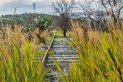 A railroad overgrown with green grass and yellow flowers Oxalis pes-caprae goat`s-foot and Arundo donax giant cane and a tree. A railroad was overgrown with stock images