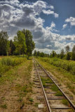 The railroad in the wood. In an environment of trees in the summer Stock Photos