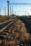 Railroads and grass Royalty Free Stock Image