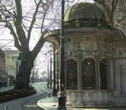 Rails de tram après un arbre épais au centre de la ville photographie stock libre de droits