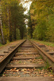 Rails in the forest Royalty Free Stock Photos