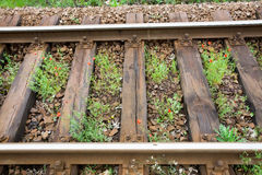 Rails and railway sleepers with sprouted plants Royalty Free Stock Images