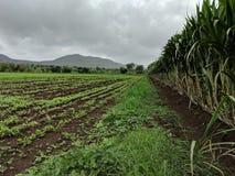 Infinity farm royalty free stock photography
