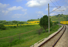Rails in sunflower fields Stock Photography