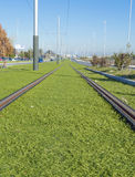 Rails of a tram Royalty Free Stock Photo