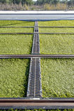 Rails of a tram Royalty Free Stock Image