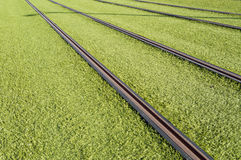 Rails of a tram Royalty Free Stock Photos