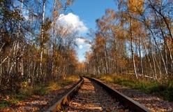 railway пущи Стоковые Изображения