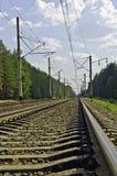 Railway через пущу сосенки Стоковая Фотография RF