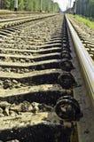 Railway через пущу сосенки Стоковое Изображение RF