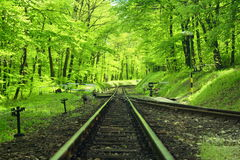 Railway. Track in the forest stock image