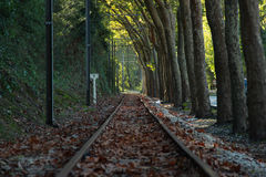Railway against trees Royalty Free Stock Photo
