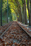 Railway against trees Stock Photos