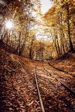 Railway in colorful forest in autumn on sunny day royalty free stock images