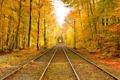 Railway in autumn forest Stock Photos